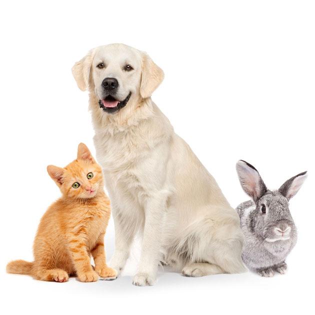 Kitty Dog Bunny