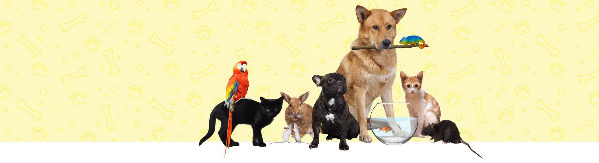 Gardel Pet Shop Owen Sound