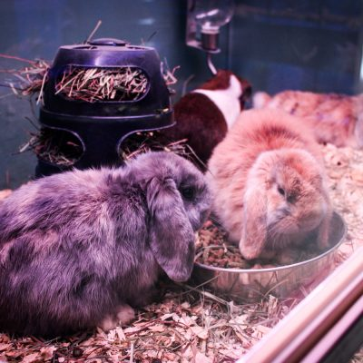 Fluffy Rabbits for Adoption
